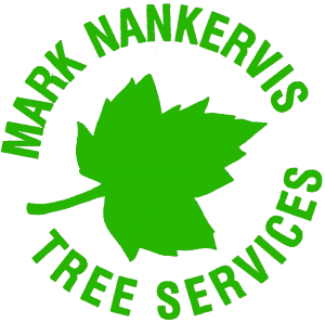Mark-Nankervis-tree-surgeon-cornwall